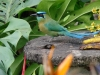 costaricaanimals_birds9