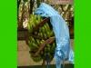 costaricaplants_2