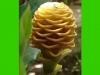 costaricaplants_misc107