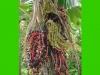 costaricaplants_misc188