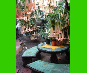 costaricabackpackers_garden8