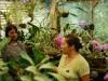 spanishschoolcostarica_ttd_orchids1